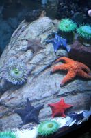 Echinoderms and Cnidarians by KateBait