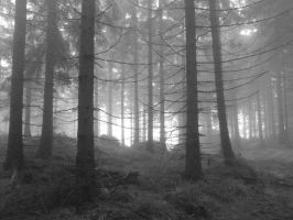 forest in the fog by c16h10n2o2