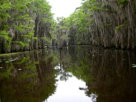 Caddo Lake by robhas1left