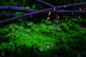 Moss in Forest by PsychodelicMess