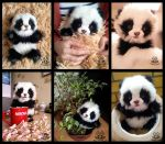 Hand made:Poseable Baby Panda by MalinaToys