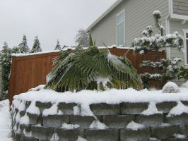 Pacific Northwest Snow of 2012 - 002 by SeawolfPaul