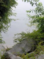 Greenery on the Lake by andrewsgirl123