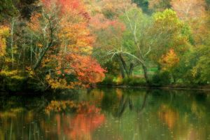 Asheville Autumn by ncphotojunkie