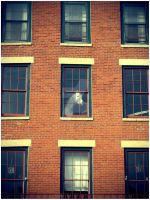 A Horse in the Window by bec312