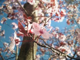Signs of Spring 2 by FlabnBone