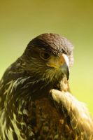 raptor_I by deoroller