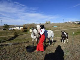 Madam red with the horses by codehostclub