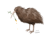 Kiwi Bird by ColorKiwi