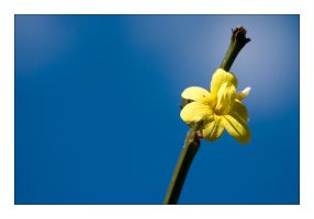 spring ::02:: by the-drow