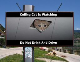 ceiling cat is watching... by hichigo666