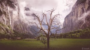 Trummelbach Tree by tvurk