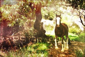 Bay Mystic Forest Premade by PS-Graphics
