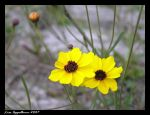 Beauty in the Sand by Cillana