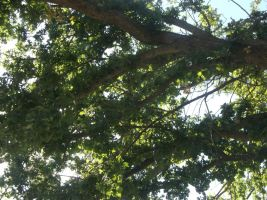 Tree Branches by RockyRoxas13