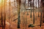 Secluded by photorip