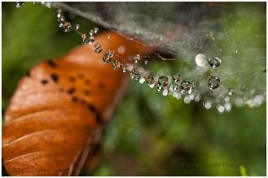 String of pearls by swiftach