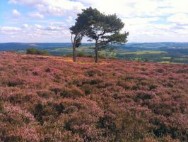 Gt. Longstone and Moor 06 by IanTP