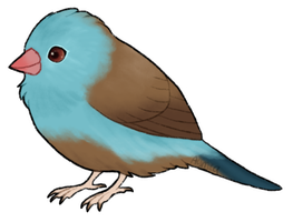 Cordon bleus are one of the cutest birbs by Aymea