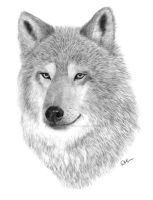 Timber Wolf by ConsciousCreations