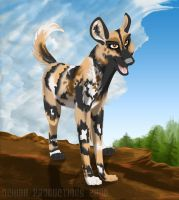 African Wilddog by Ochiba