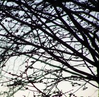 Branches by RayvenStock