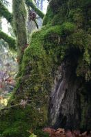 Hollow tree stock 1 by rustymermaid-stock