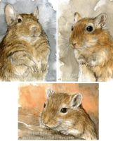 Degu and Gerbils by Pannya