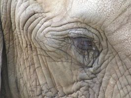Elephant - eye by dtf-stock