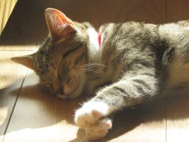 Sleeping in the Sunshine by Toots-Baby34