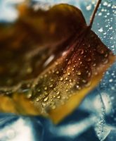 autumn rain 2 by Anti-Pati-ya