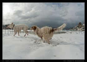 dogs chasing-Severe weather warning by LemnosExplorer