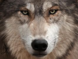 Timber Wolf by DeathSith