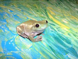 Whites Tree Frog on Green by artmonstergirl