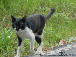 Country cat 20141130 _ 1 by K4nK4n