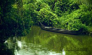 Green World - viewfinder 0040 by sudhithxavier