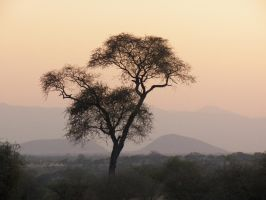 African Sunset by SplashKittyPhotos