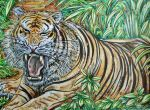 Indian Tiger by Thelostsoulofpop