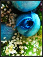 Blue roses by plhu