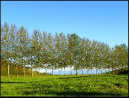 Tree Row by JocelyneR
