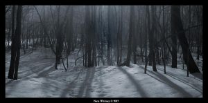 Lost in the woods by mr-sarcastic1984