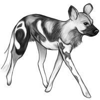 African wild dog color by piperlee on deviantart for African wild dog coloring pages
