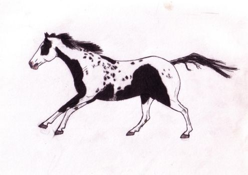 Galloping Paint Horse by WeirdAille