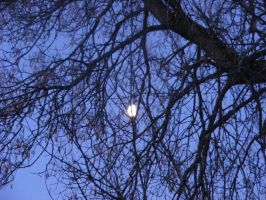 faded moon through the tree branches by BlueIvyViolet