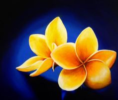 Hawaiian yellow plumeria by Li-Soro