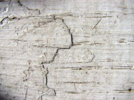 Cracked Painted Wood by ghostforms