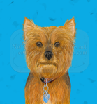 Commission--pet portrait--Yorkie by Colliequest