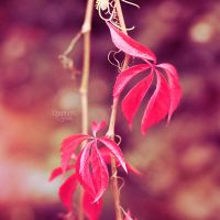 red october by Pinkmango77