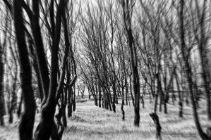 GhostlyTrees. by BloodyPentagram