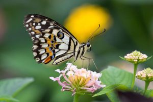 Butterfly Collection 4 by KevPG